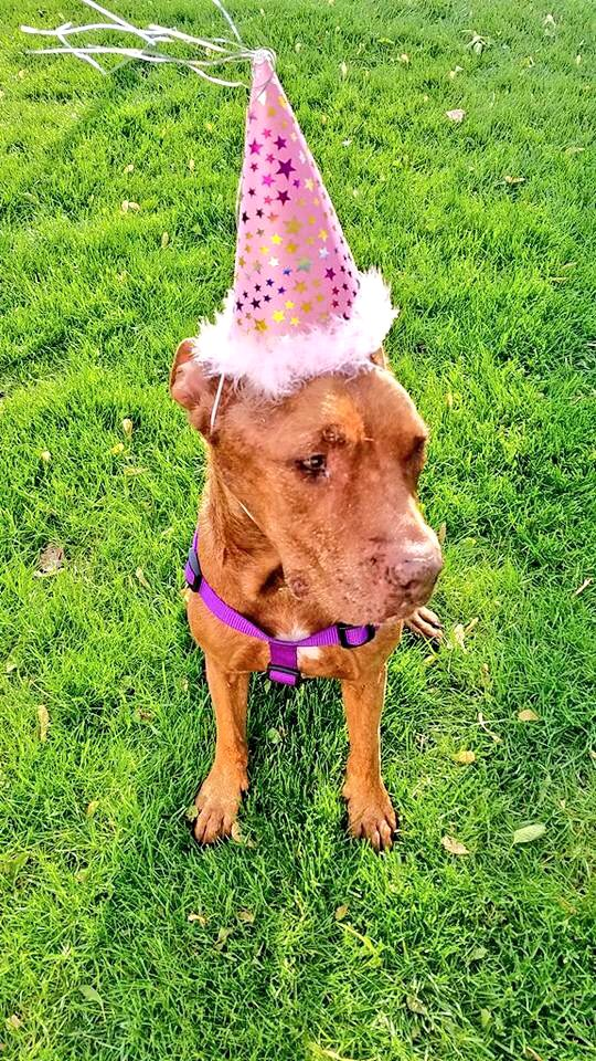 This Little Piggy Turns 15 Years Old On Thursday And Wants To Know A Good Chicago Patio Where She Is Welcome Have Quincinera Birthday Party