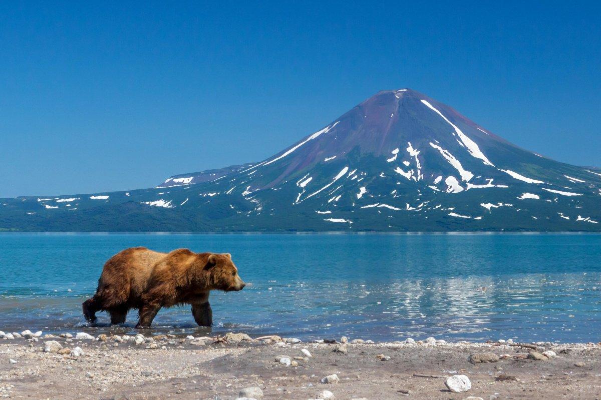 есть мужчины, картинки камчатский медведь вкусу
