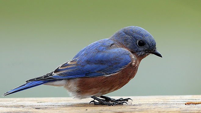 Blue Bird Names >> City Of Crossville On Twitter City Council Names Eastern