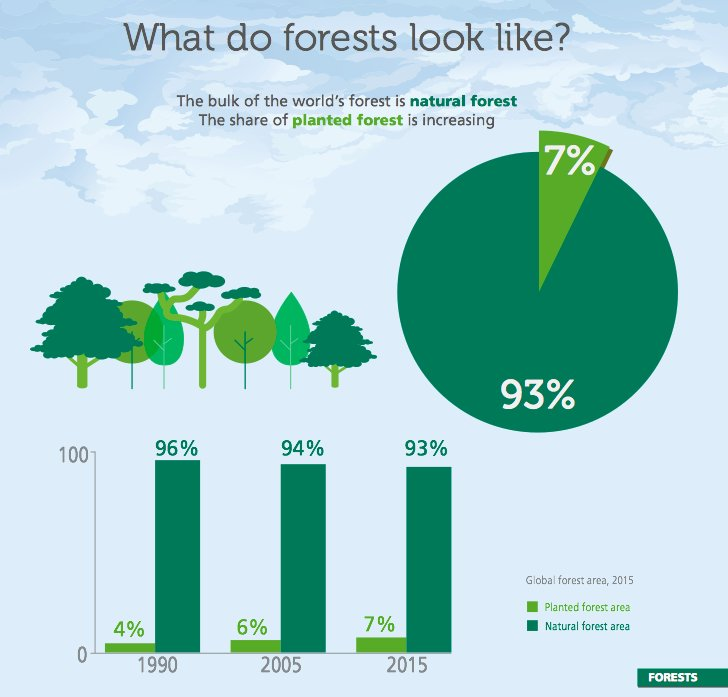 What do forests look like? bit.ly/2fbdc4e #ForestsMatter