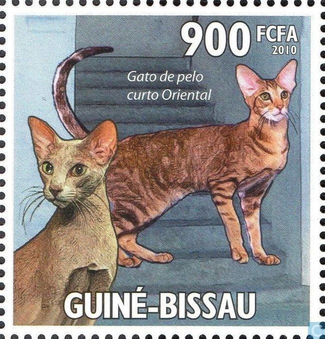 猫 画像 cat image おはようございます。 ギニアビサウの猫切手 catawiki