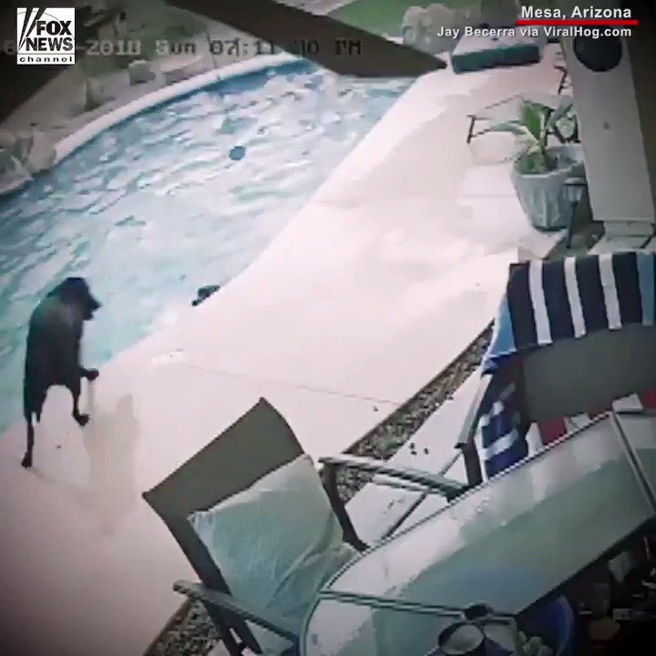 AMAZING: When Smokey couldn't get out of the pool, it was Remus to the rescue! https://t.co/TwObnNh0EY https://t.co/fwamtZYWue