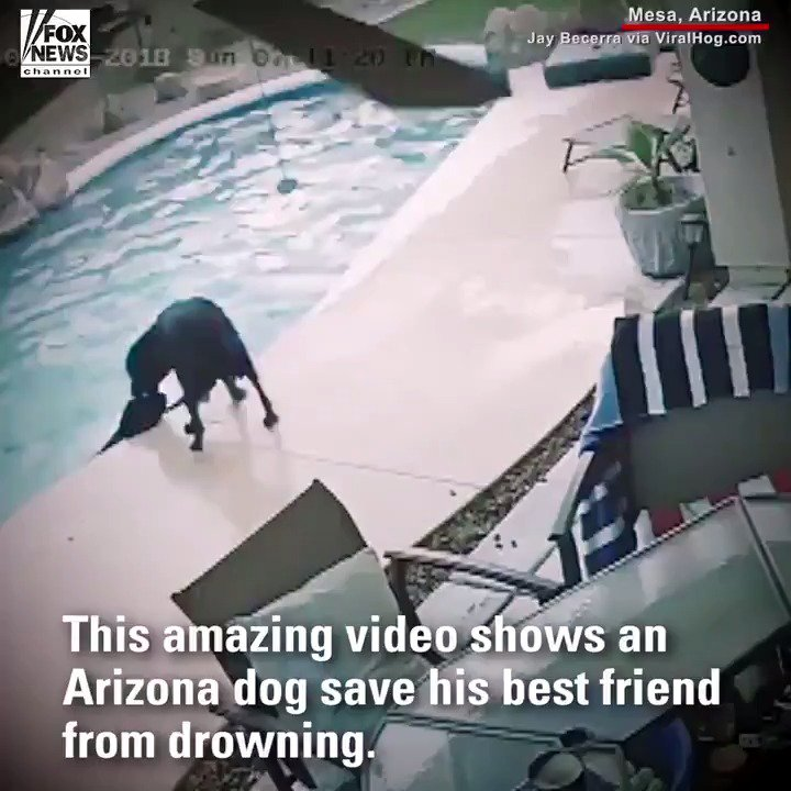 AMAZING: When Smokey couldn't get out of the pool, it was Remus to the rescue! https://t.co/TwObnNh0EY https://t.co/6ZvlaomVh3