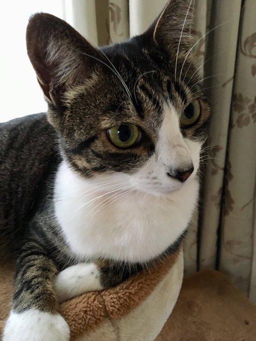 猫 画像 cat image おはようございます\( 'ω')/おひさま出てくるのどんどん早くなって、猫の活動開始もどんどん早くなる今日このごろツライ
