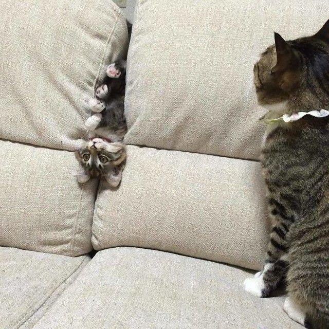 猫 画像 cat image もちろん猫だから仕方ない。あちらこちらの猫たちによるやらかしシーンを詰め合わせでどうぞ : カラパイア