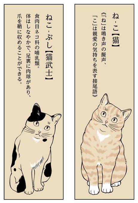 猫 画像 cat image おはようございます。みんな心に、知ってる猫図鑑を持っている。ときどき開いて想いを馳せる。