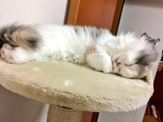 猫 画像 cat image まだ寝てたい…