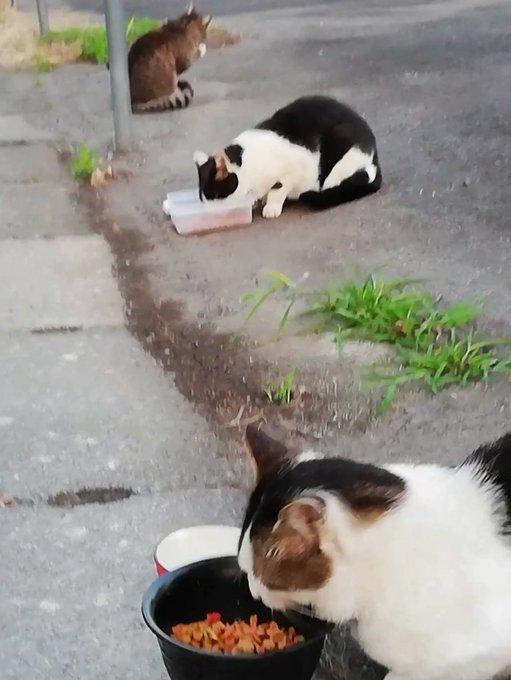 猫 画像 cat image 明け方です、暑くなりました??あいかわらず、みんな毎日よく食べ元気に走り回っています?