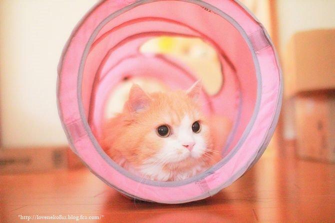 猫 画像 cat image トンネルからしつれいしまーす?