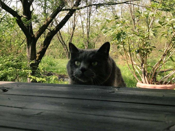 猫 画像 cat image 猫がテーブルとび乗る瞬間 くるぞくるぞ キターーw (ピント合ってませんがあまりに顔がオモシロいので