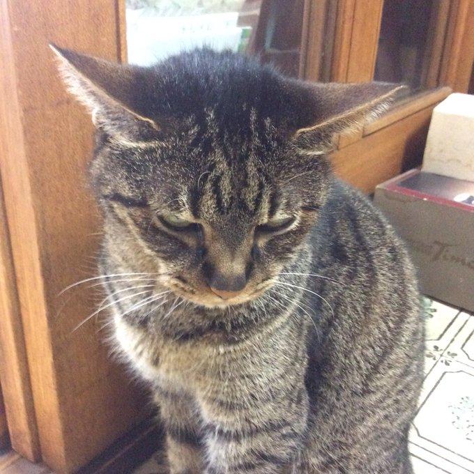 猫 画像 cat image おはようございます!  毎度ご贔屓ありがとうございます??  飯を食わない、ワガママじっちゃんです。