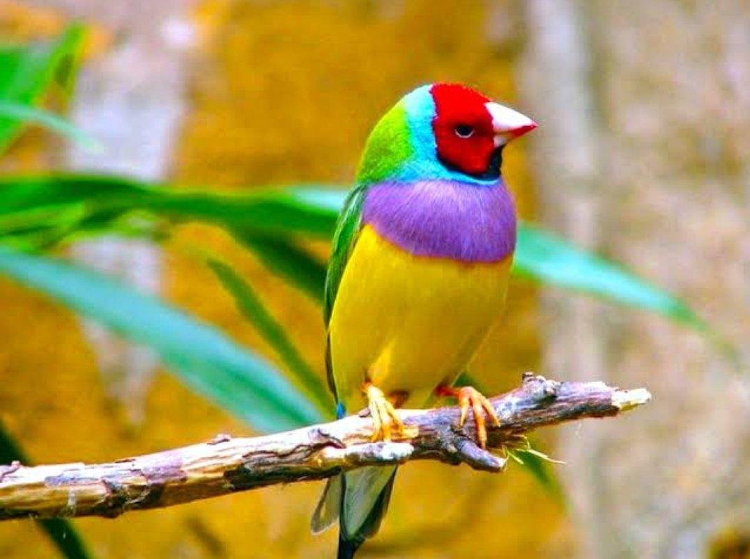 Omg Cutebirds On Twitter Rainbow Colors As Bird