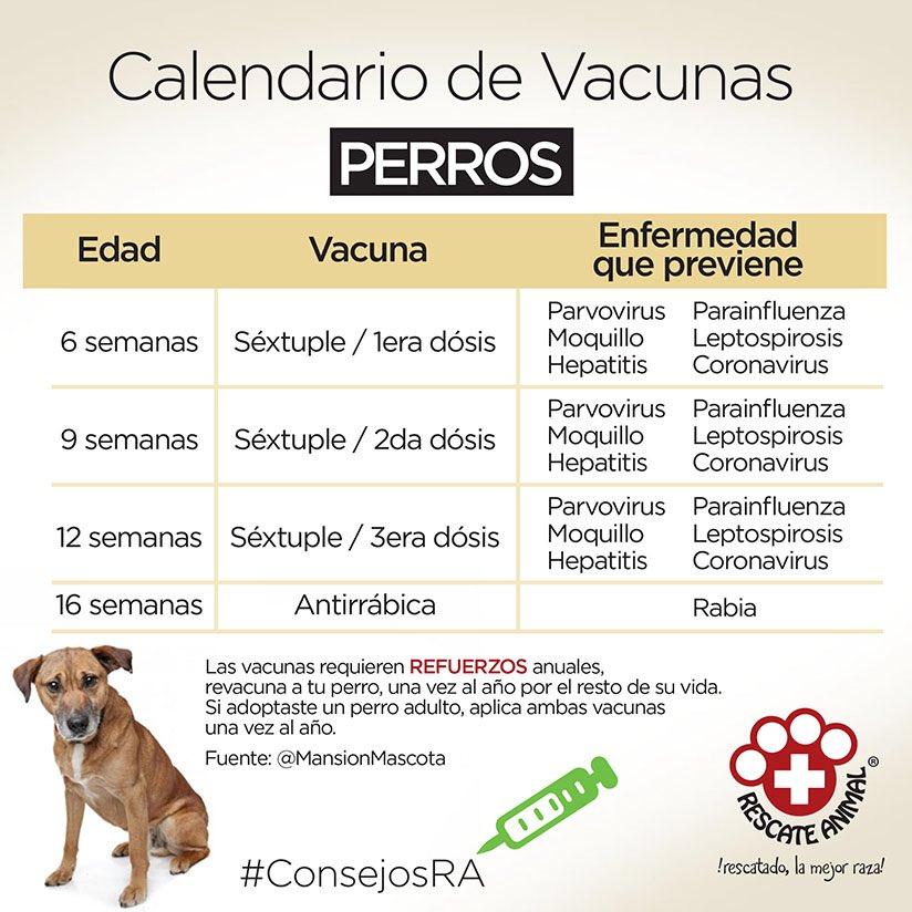 Vacunas Gatos Calendario.Pinchaditadeamor Hashtag On Twitter