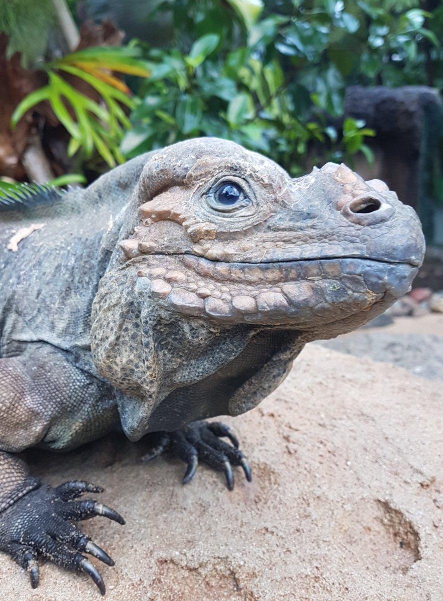 Australia Zoo's photo on Ponder