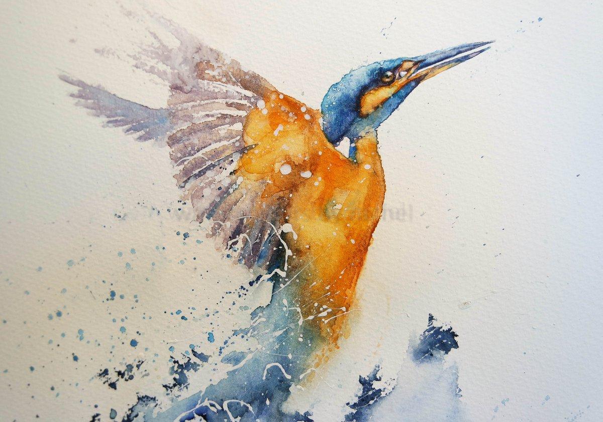 Rachel Toll On Twitter Happy Wednesday Kingfisher