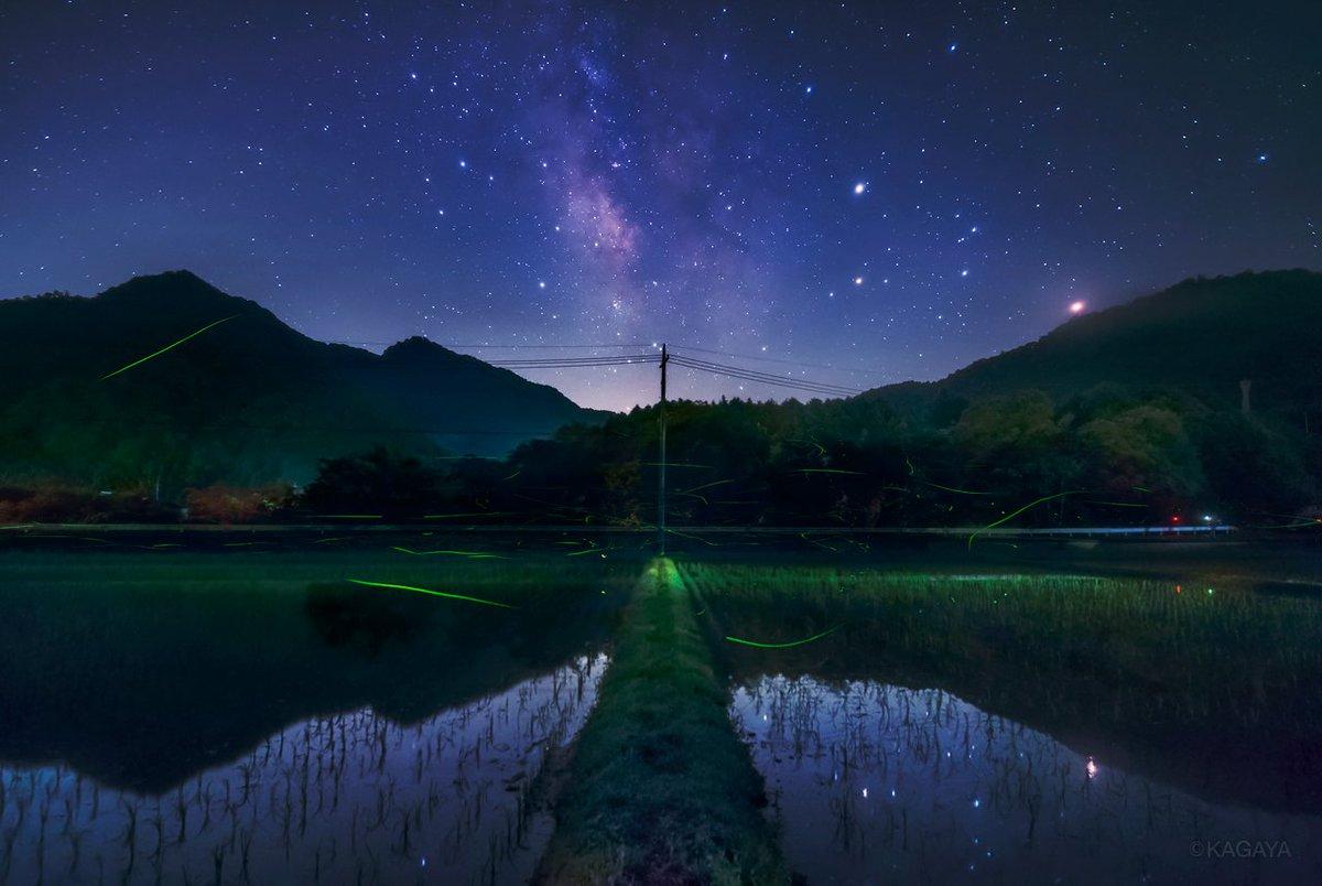 蛍とそのむこうの宇宙。 深夜、蛍たちは草の陰で眠りにつき、空いっぱいの星だけが残りました。 (以前岡山県にて撮影) 今日もお疲れさまでした。明日もおだやかな一日になりますように。