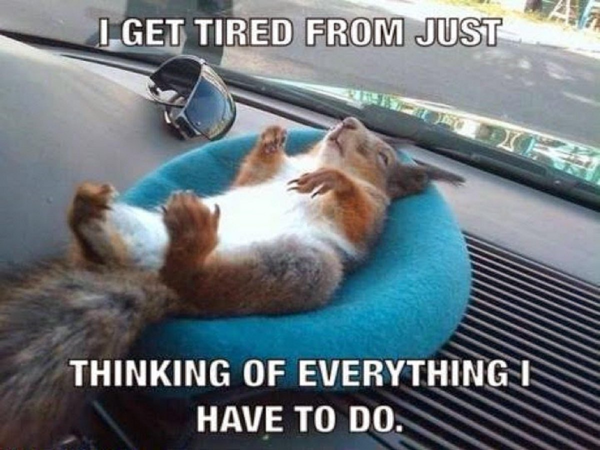 Funny Have A Good Day At Work Meme : Secret squirrel @secretsquirrel twitter