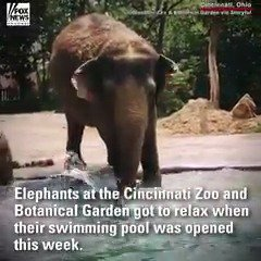 Elephants at the Cincinnati Zoo are having fun in the sun now that their swimming pool is open. https://t.co/n2169xTSgU