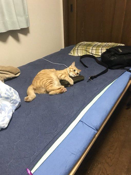 猫 画像 cat image うちの猫が俺の財布に抱きついとる