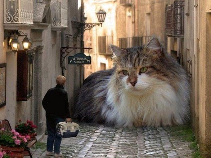 猫 画像 cat image 死ぬまでにやりたいこと……でかいもふもふの猫を飼ってみたいけど、四人目を迎え入れるのはさすがに厳しいのよねえ。