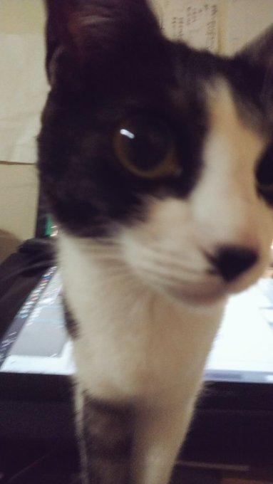 猫 画像 cat image 猫で前が見えない