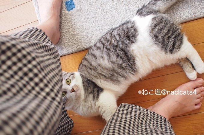 猫 画像 cat image ガウチョパンツを履いていると必ず覗きにくるおこめさん。  えっちねぇ!(笑)