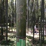 やめて!京都の嵐山の竹林に落書き…竹に付けられた落書きは一生消せない…