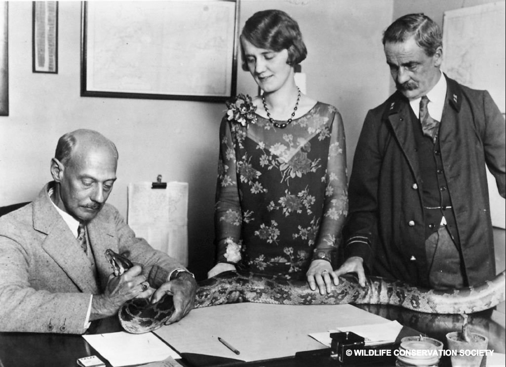 Grace Davall began her career in a secretarial role @BronxZoo in 1923, at age 18. She rose to become Assistant Curator of Mammals and Birds in 1952. Today, the City of New York is launching a new resource for women to make their own #nycpowermove. Visit  http:// women.nyc  &nbsp;  <br>http://pic.twitter.com/Oea6tkTJy8