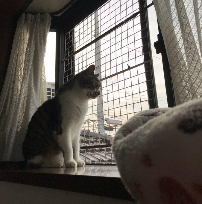 猫 画像 cat image おはよ〜ございます❣︎ 猫ランドは隊長が、リビングはレオちゃんがニャルソック中〜〜 他はどうした〜〜? そんな木曜の朝♪︎ 始めるよん\♡︎/