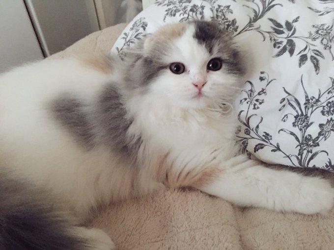 猫 画像 cat image おはようございます!!