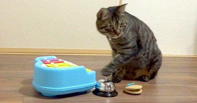 猫 画像 cat image 『どんぐりころころ』を見事に演奏する猫さん。楽器を鳴らす姿がとっても可愛かった ( *´艸`)♡