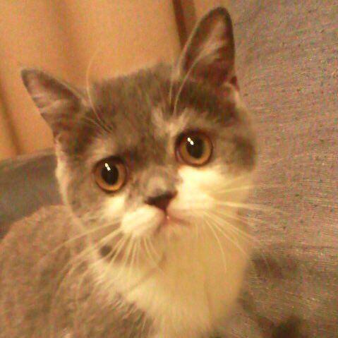 猫 画像 cat image 【今日のにゃんこ】  猫社会に揉まれ過ぎたようだ...  じろうさん