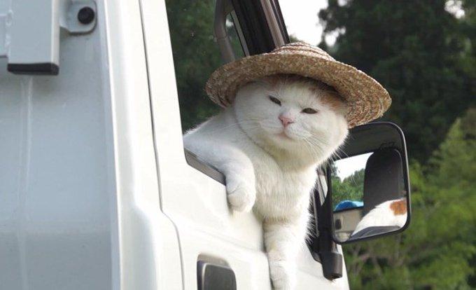猫 画像 cat image 軽トラが似合いすぎる猫さん。しばらくすると強烈な眠気が襲ってきたようで ( *´艸`)