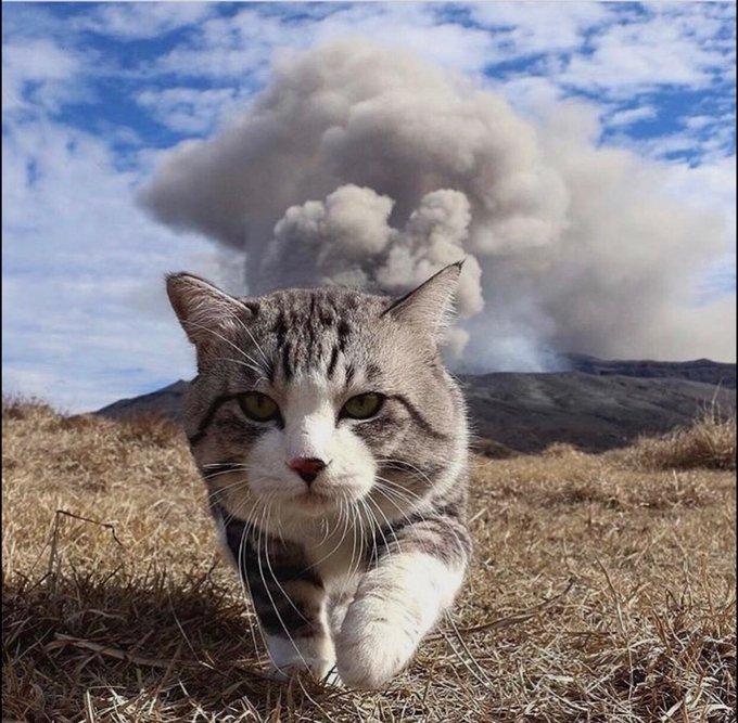猫 画像 cat image 仕事だ!猫パンチ??
