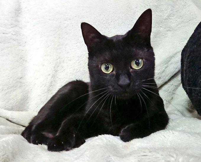 猫 画像 cat image 黒い天使✨✨黒猫ジュビくん 『おはようございましゅ☀️ 今日もよろしくお願いいたしましゅ?』 by.ジュビ