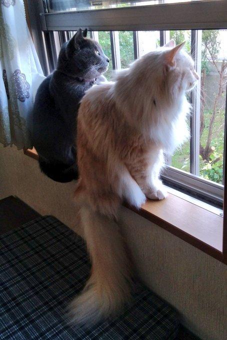 猫 画像 cat image ニャルソック楽しそうだね~?