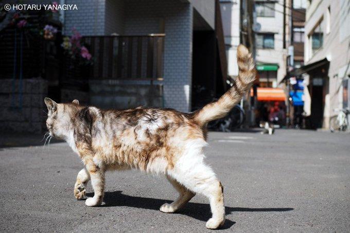 猫 画像 cat image 本日の猫さん。尾は口ほどに物言う。