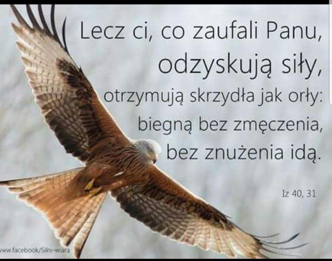 lecz ci, co zaufali Panu, odzyskują siły, otrzymują skrzydła jak orły: biegną bez zmęczenia, bez znużenia idą.