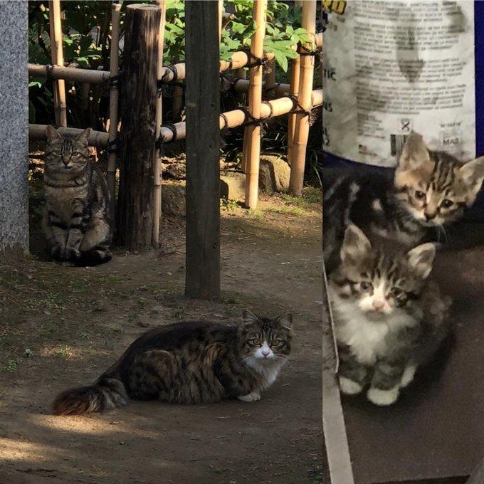 猫 画像 cat image 右の子猫たちの一年後が左の猫たちです。