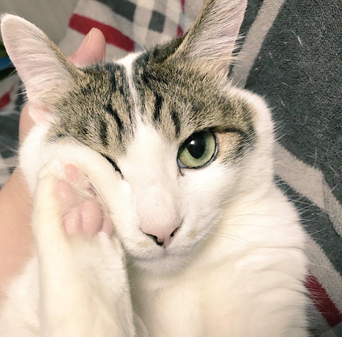 猫 画像 cat image やんちゃな猫   1