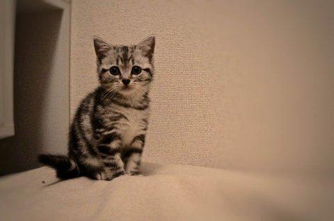 猫 画像 cat image 良い歳のとり方をした