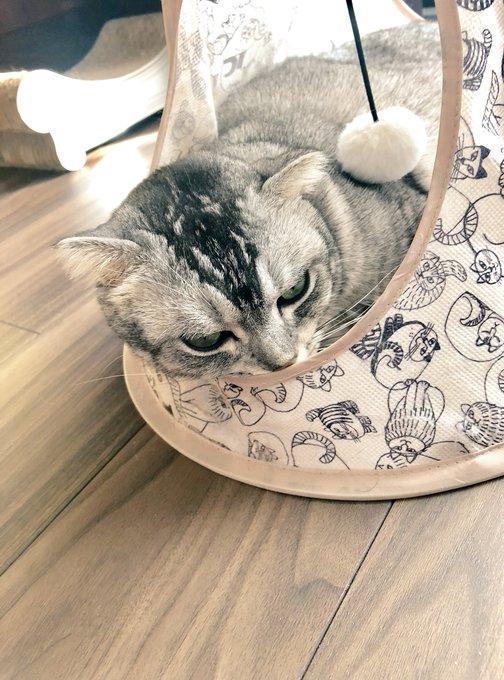 猫 画像 cat image まどろむ もふ曜日??       してます♪