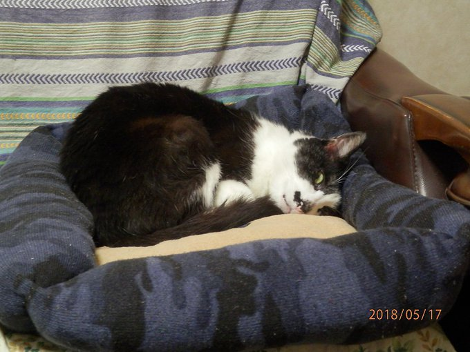 猫 画像 cat image まあかわいい!! うちの猫が気持ちよさそうに寝て・・・・・・・・・  見てる!! こっち見てる!!!