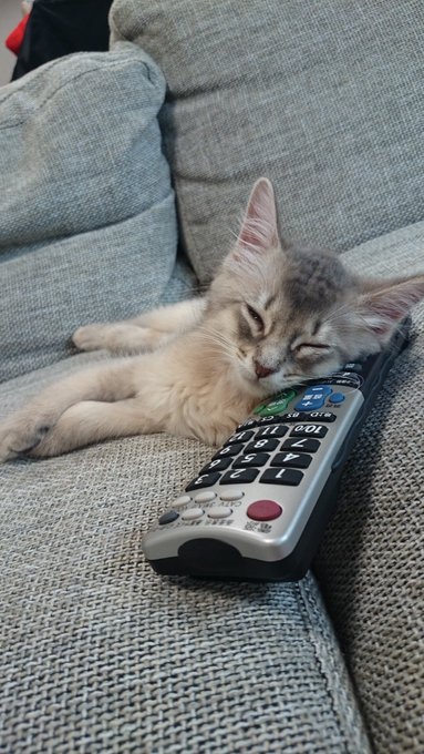 猫 画像 cat image
