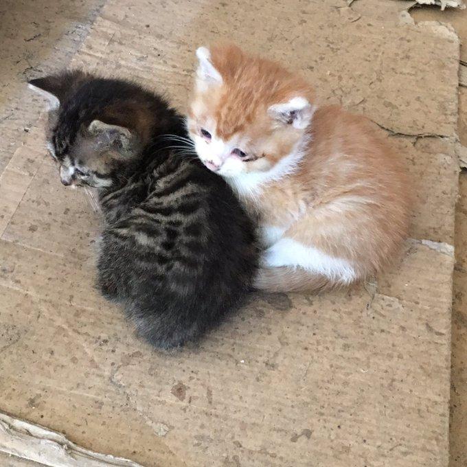 猫 画像 cat image 【本日の野良ぬこ】   д゚).oO(1枚目→先月末に撮影。2枚目→一昨日撮影。まだまだ外の世界が怖いのかよく逃げられます.....)