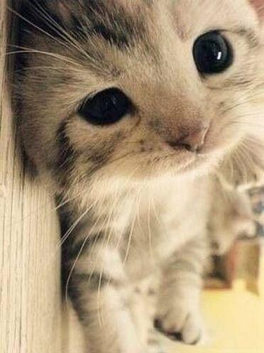 猫 画像 cat image ✨猫の上目使いがかわいすぎる✨