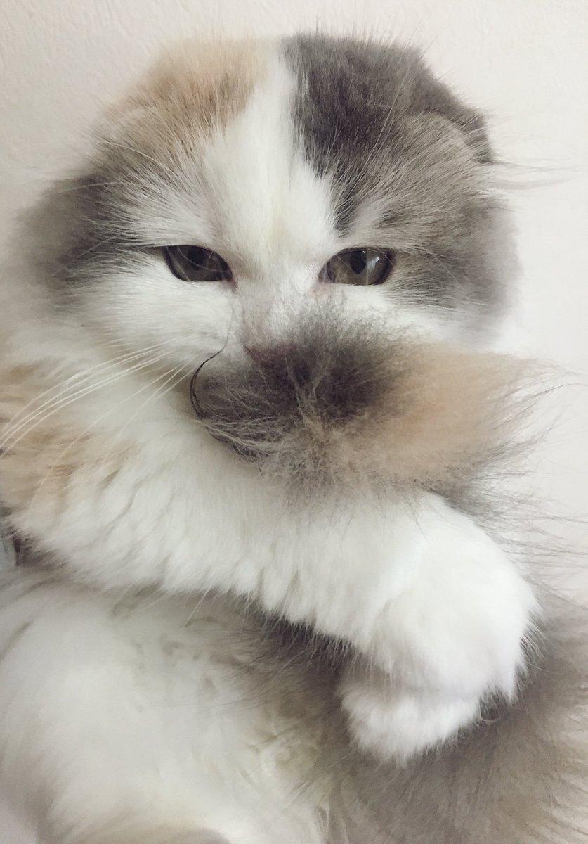 猫 画像 cat image しっぽ大好き?     0