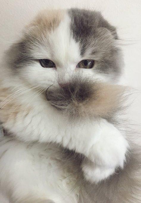 猫 画像 cat image しっぽ大好き?