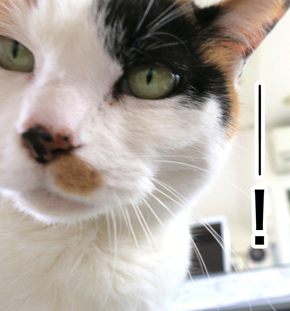 猫 画像 cat image ご注意くださいませ〜というお話いただきました! アイビーの葉っぱ、猫は中毒起こす一つのようです。かじらないよう撤去ですね(> - <)以下のサイト参照くださいませ。   0