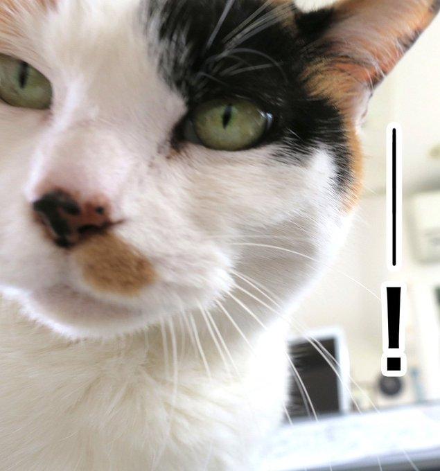 猫 画像 cat image ご注意くださいませ〜というお話いただきました! アイビーの葉っぱ、猫は中毒起こす一つのようです。かじらないよう撤去ですね(> - <)以下のサイト参照くださいませ。